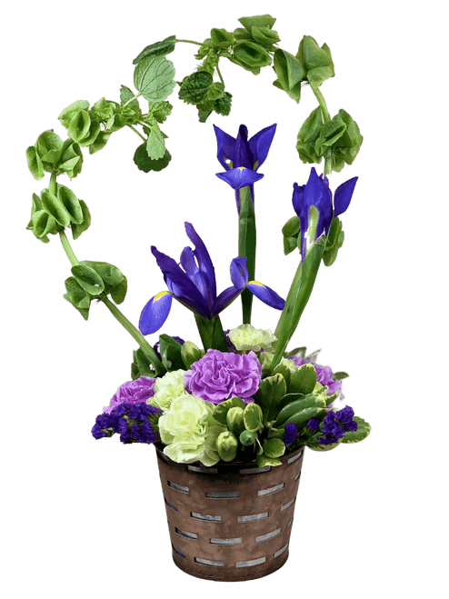 Hearts Delight:  Green bells of Ireland, purple irises, lavender and green carnations, accented with pittosporum and purple statice, in a bronze metal planter.
