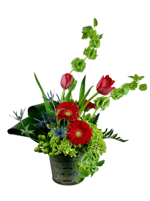 Twist and Shout:  arrangement of red tulips, red gerber daisies and green Bells of Ireland in a metal planter