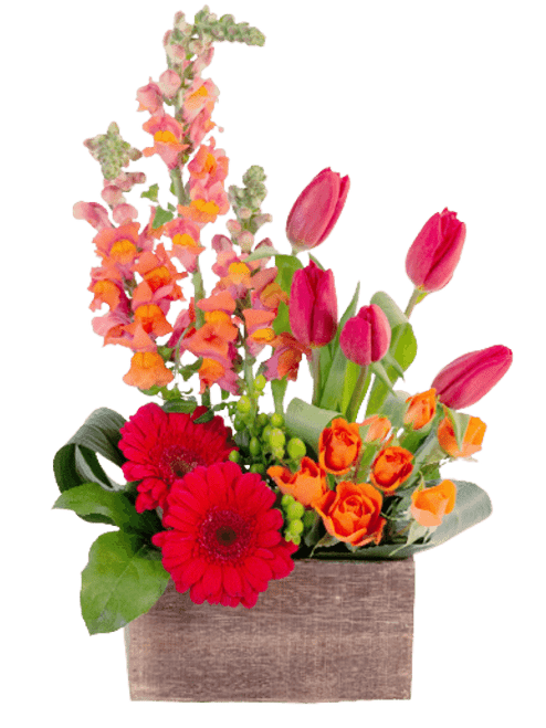 'March Gladness,' a modern farmhouse-style design of snapdragons, tulips, gerbera, and spray roses, in bright tones of pink, red, and orange, presented in a rustic wooden container.