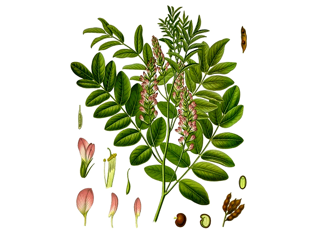 Licorice Seeds