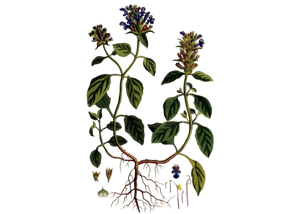 Self Heal Seeds