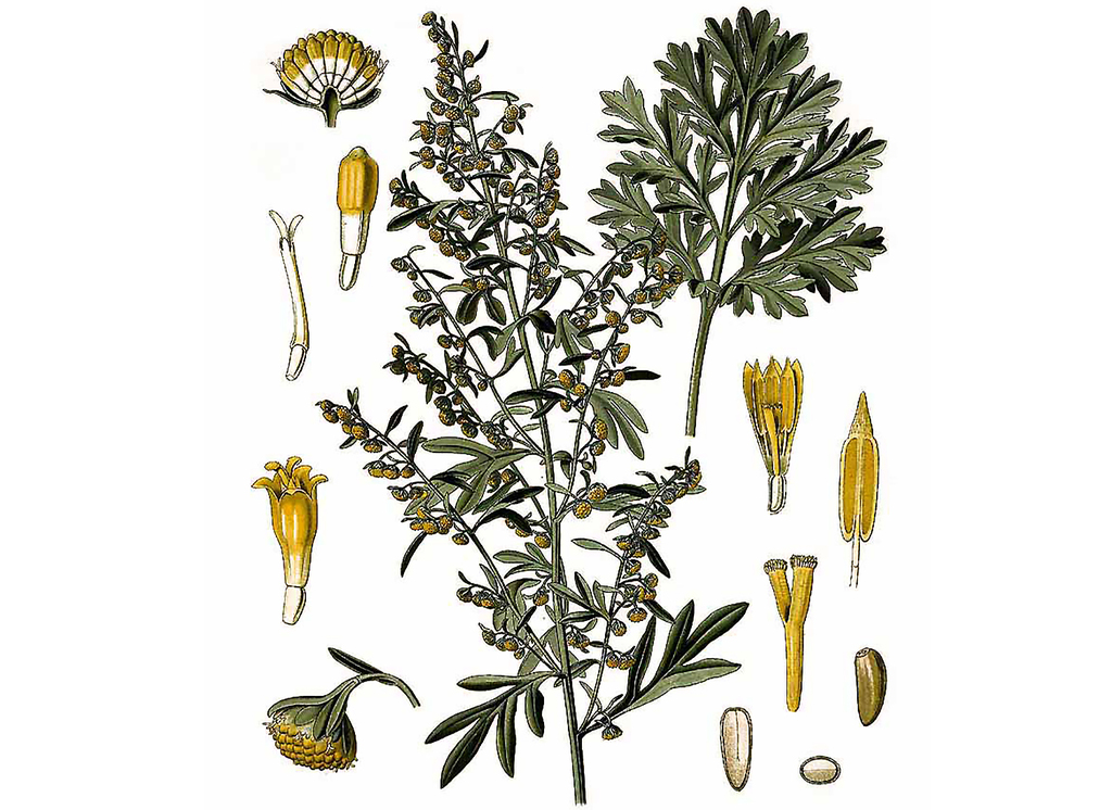 Wormwood Seeds