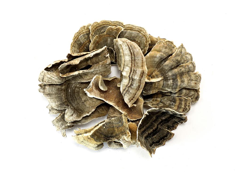 Organic Turkey Tail Mushroom