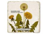 Dandelion Stone Coaster