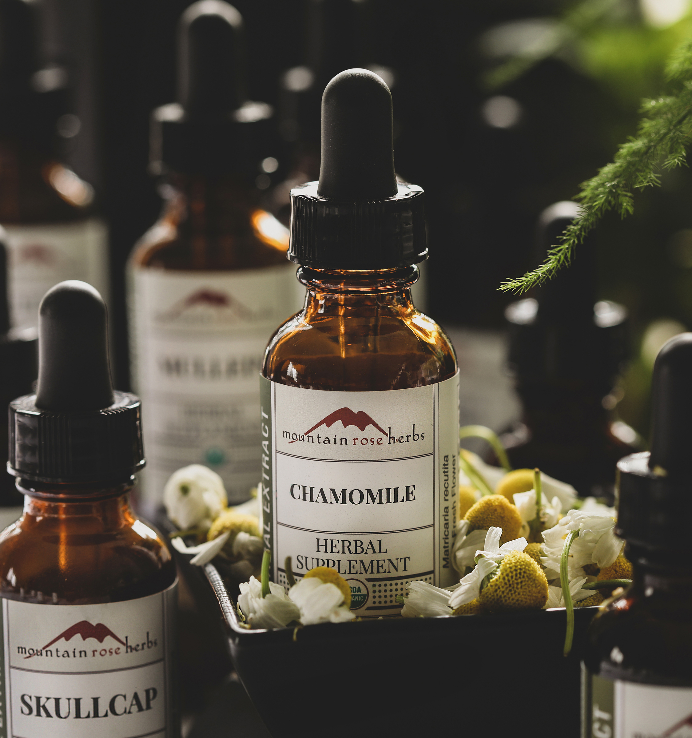 single-herbal-tinctures-sq.png