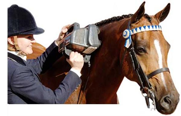 Thumper Equine Pro Horse Massager thumper, massager,equine pro, horse massager