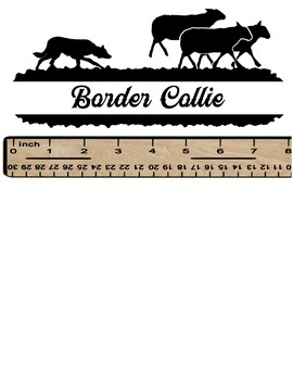 Border Collie on Sheep in White or Black