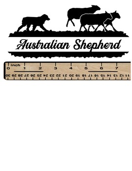 Australian Shepherd on Sheep in White or Black