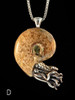 Fossilized Ammonite Nautilus Necklace - D
