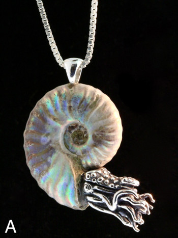 Opalized Fossil Ammonite Nautilus Necklace - Silver