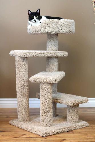 New Cat Condos Compact Cat Tree