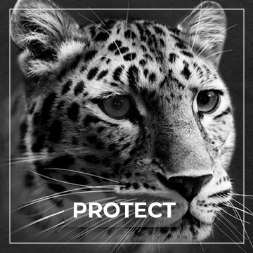 Protect Endangered Species Collection