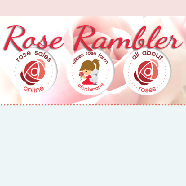 rose-rambler-x2-600x600.jpg