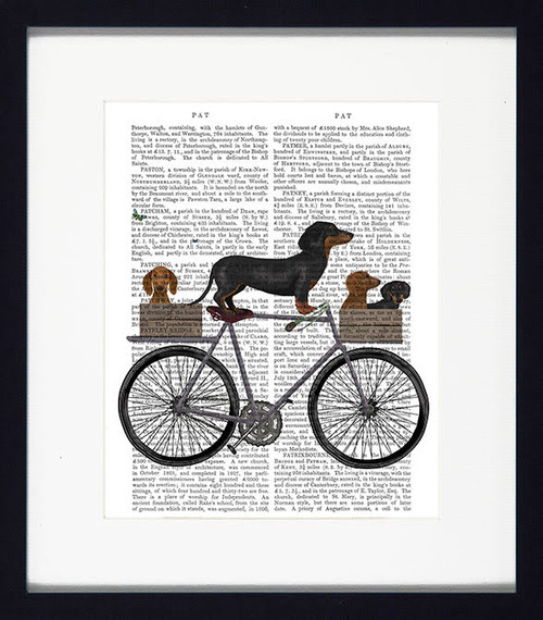 Dogs on Tandem Daschund Picture