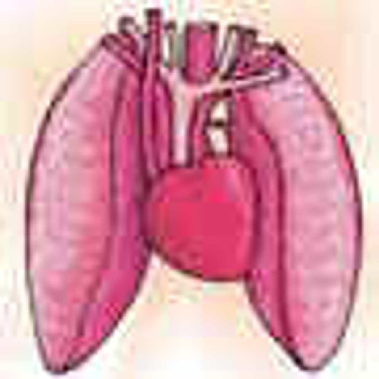 Respiratory System Supplements