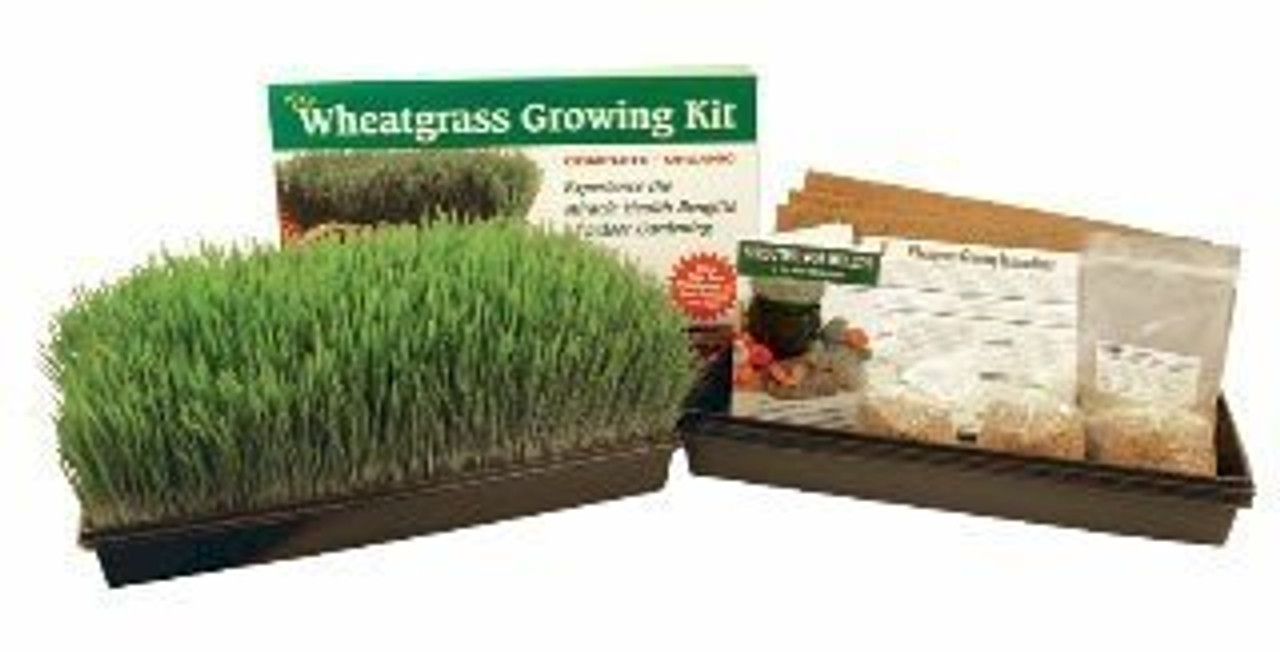 Wheatgrass Sprouter
