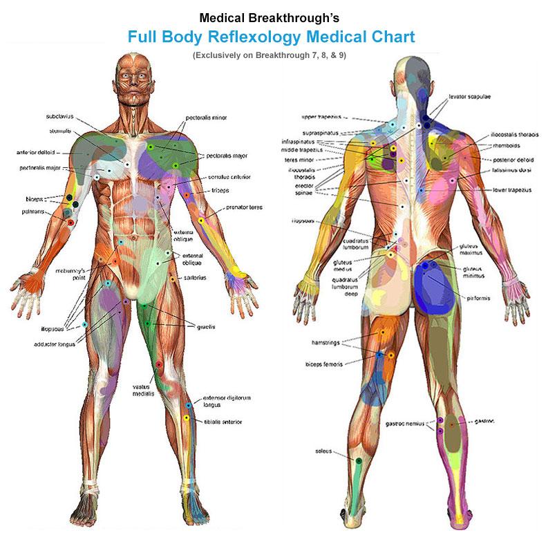 4fullbody-reflexology.jpg