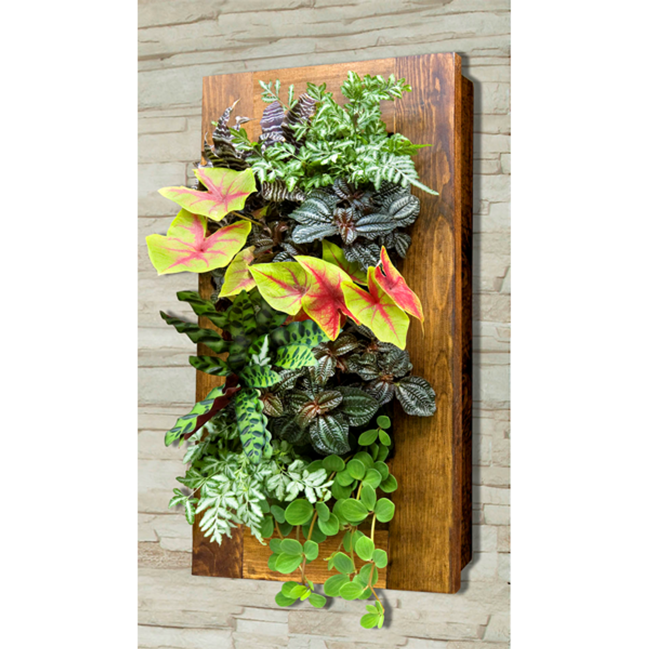 Grovert Living Wall Planter Light Oak Frame Kit
