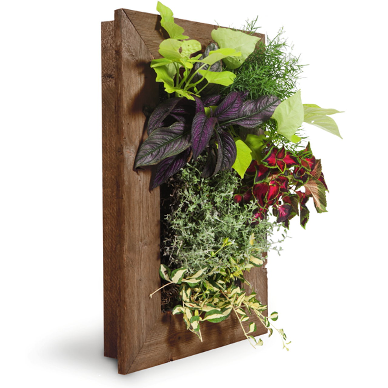 Grovert Living Wall Planter Ghostwood Frame Kit