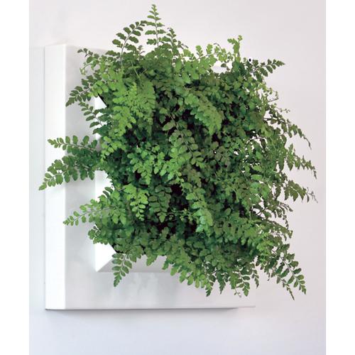 BioMontage Live Wall Planter