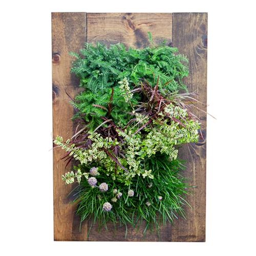 Grovert Wall Planter - Walnut Frame Kit