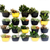 WallyGro Eco Planter (Set of 4)