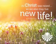 [Shepherd Guides Baptism Follow-Up Cards] Post-Baptism Easter Card (Cards)