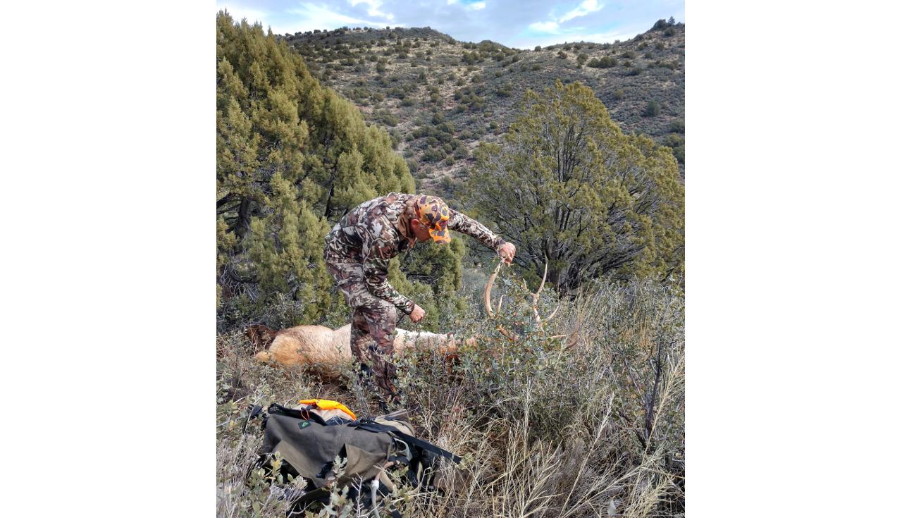 elk-hunting-packs-seek-outside-peregrine.jpg