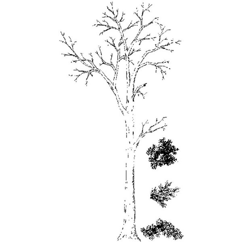 Tree Set (4 pc) — Small