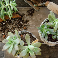 Rescued from the Recyling Bin Succulent Thank-You Gifts