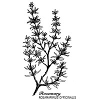 Rosemary — Small Wood Mounted Stamp by Classic Stampington & Company