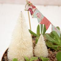 Christmas Succulent Garden Project