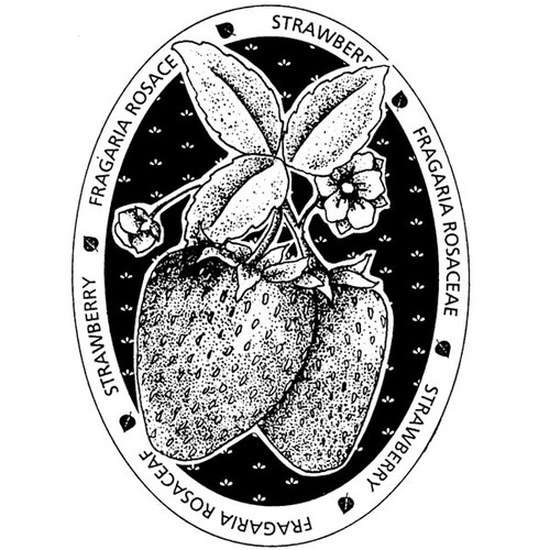 Strawberry — Medium Wood Mounted Stamp by Classic Stampington & Company