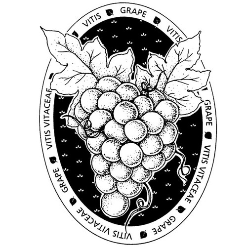 Grapes — Medium Unmounted Stamp by Classic Stampington & Company