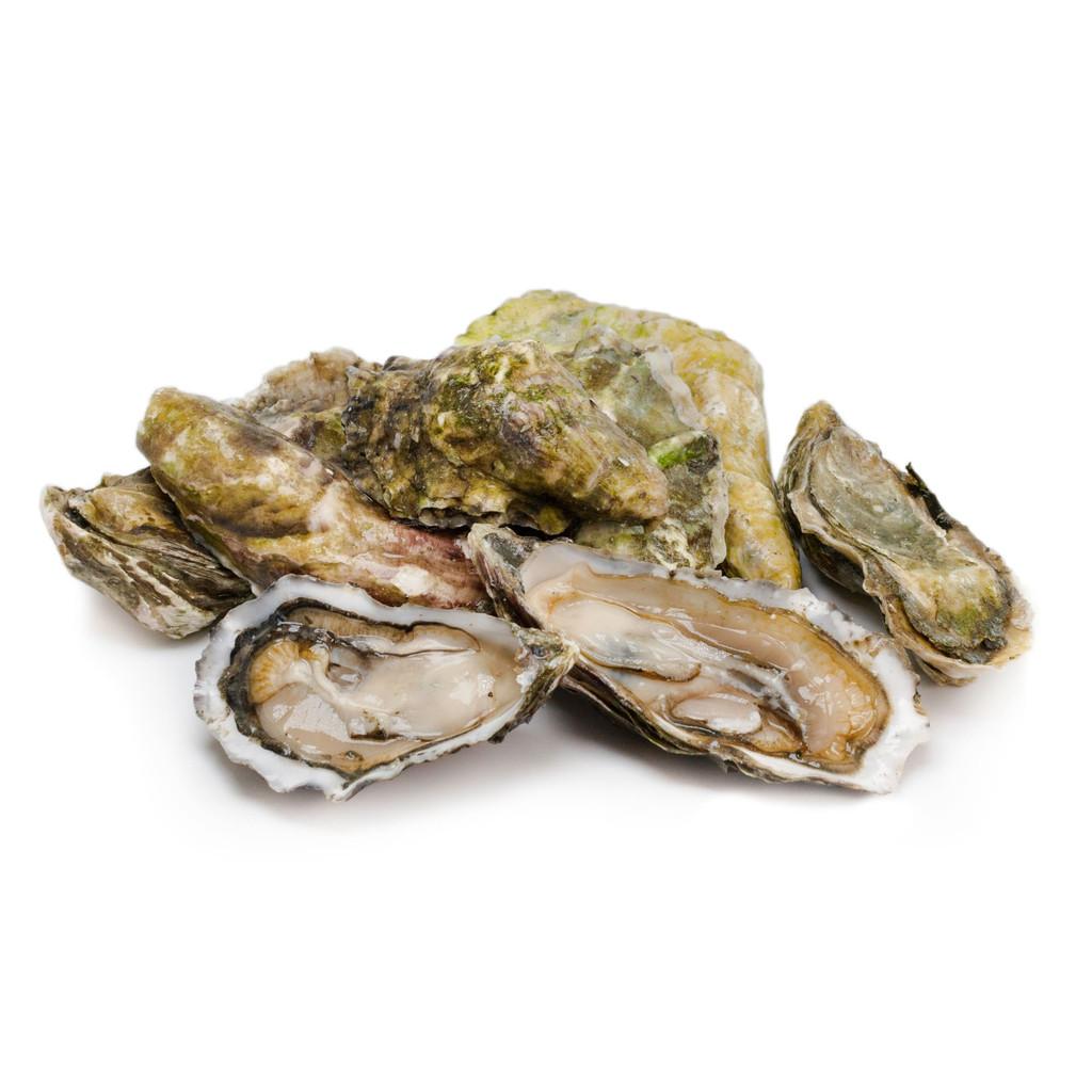 Netarts Oysters - One Dozen