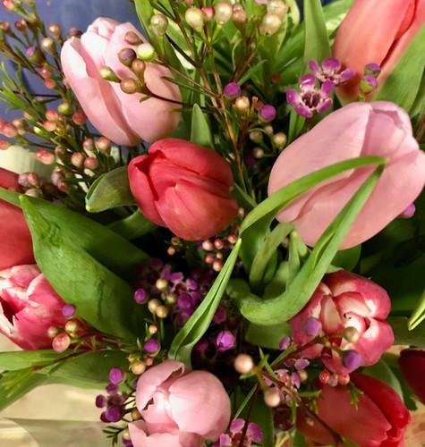 Assorted Tulips (Buy The Bunch)
