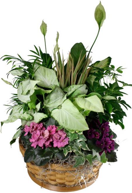 Large Plant Garden Basket