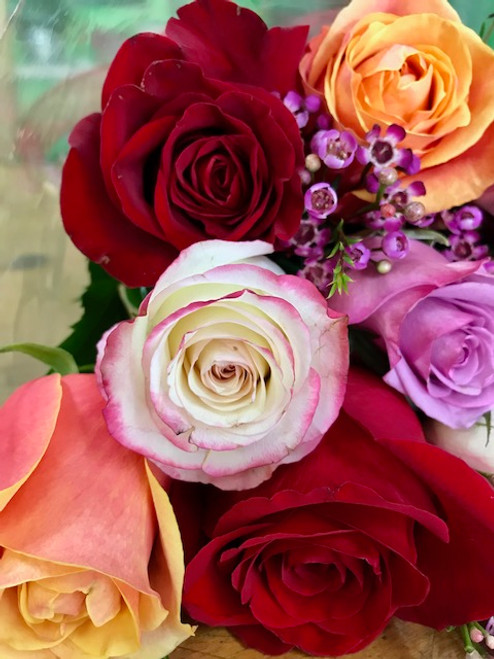 6 Assorted Roses Wrapped in Love