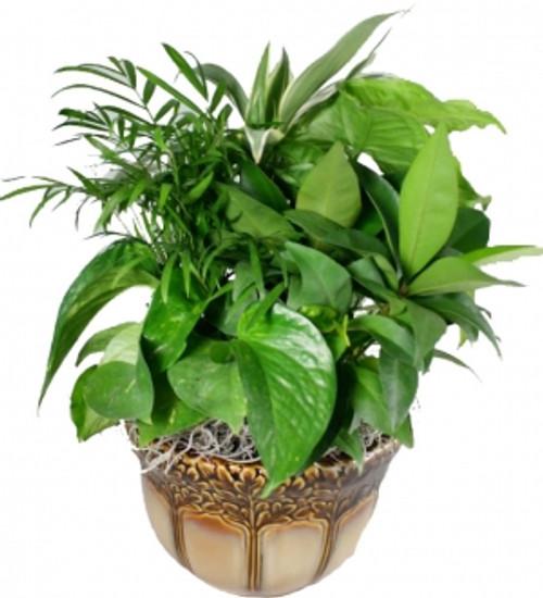 Ceramic Plant Garden