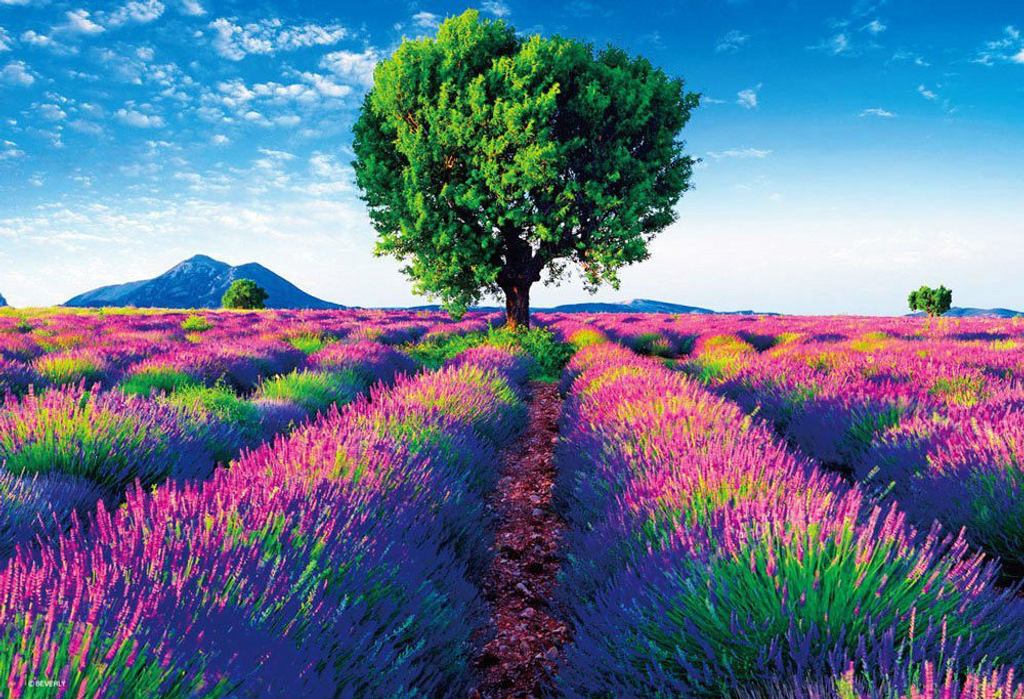 Beverly Jigsaw Puzzle M81-849 Beautiful Scenery Provence France (1000 S-Pieces)