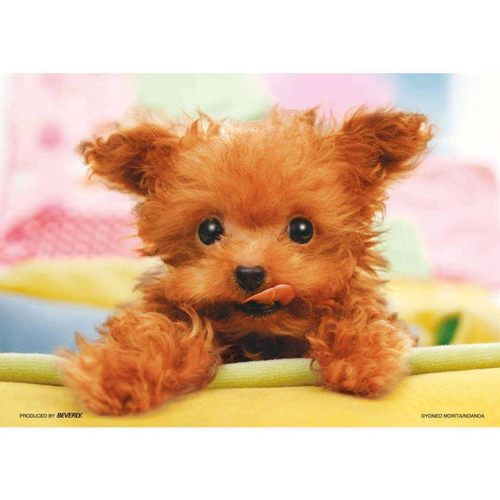 Beverly Jigsaw Puzzle P64-101 Dog I am hungry (108 Pieces)