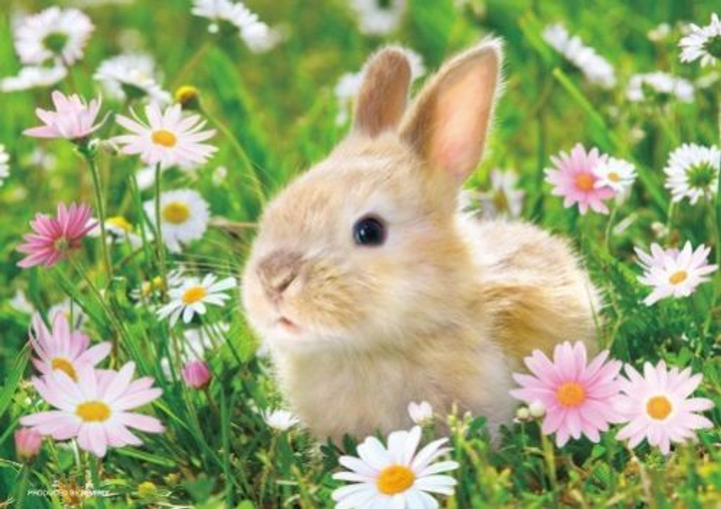 Beverly Jigsaw Puzzle P88-009 Lovely Rabbit (88 L-Pieces)