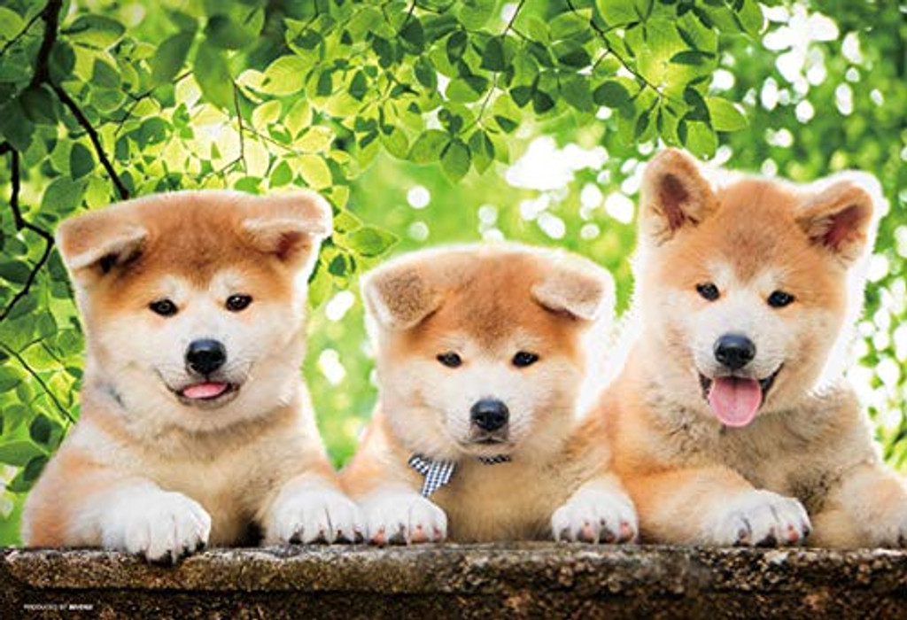 Beverly Jigsaw Puzzle P33-161 Pet Active Akita-inu Dogs (300 Pieces)