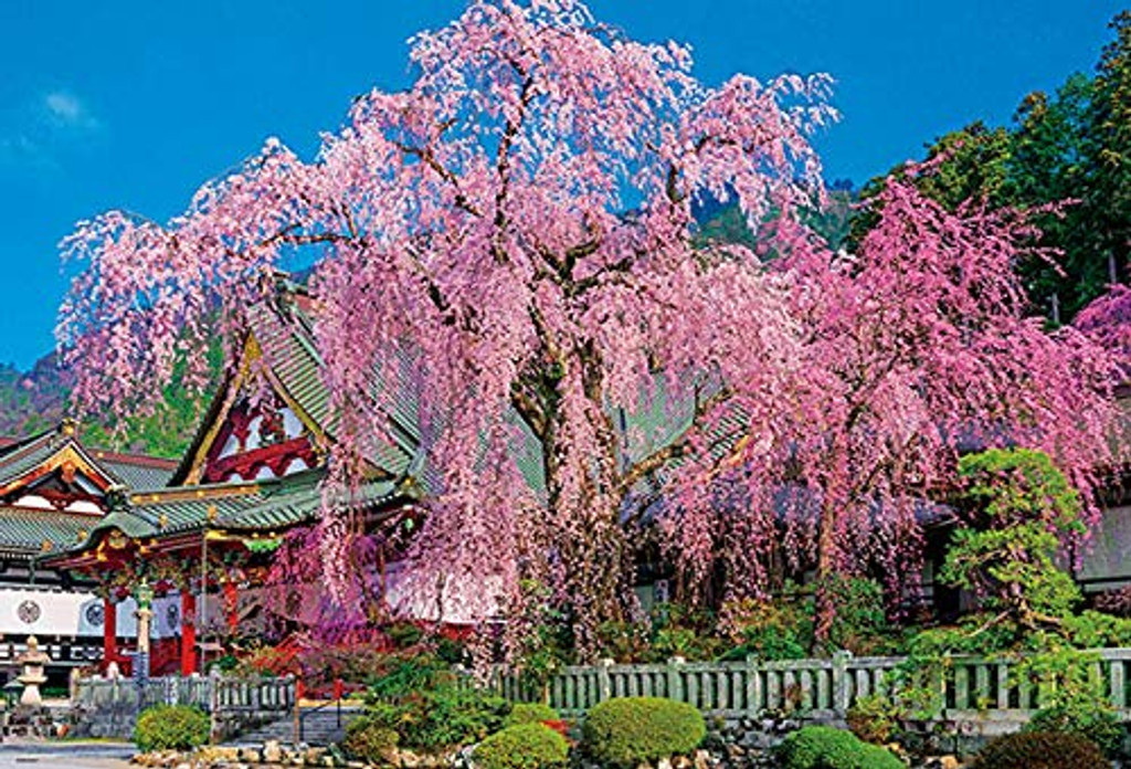 Beverly Jigsaw Puzzle 51-252 Japan Weeping Cherry Blossom Blooming Kuon-ji (1000 Pieces)