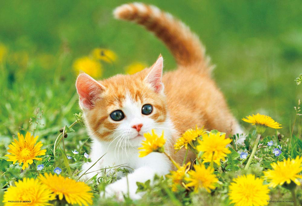 Beverly Jigsaw Puzzle P33-174 Cat and Dandelion Flower (300 Pieces)