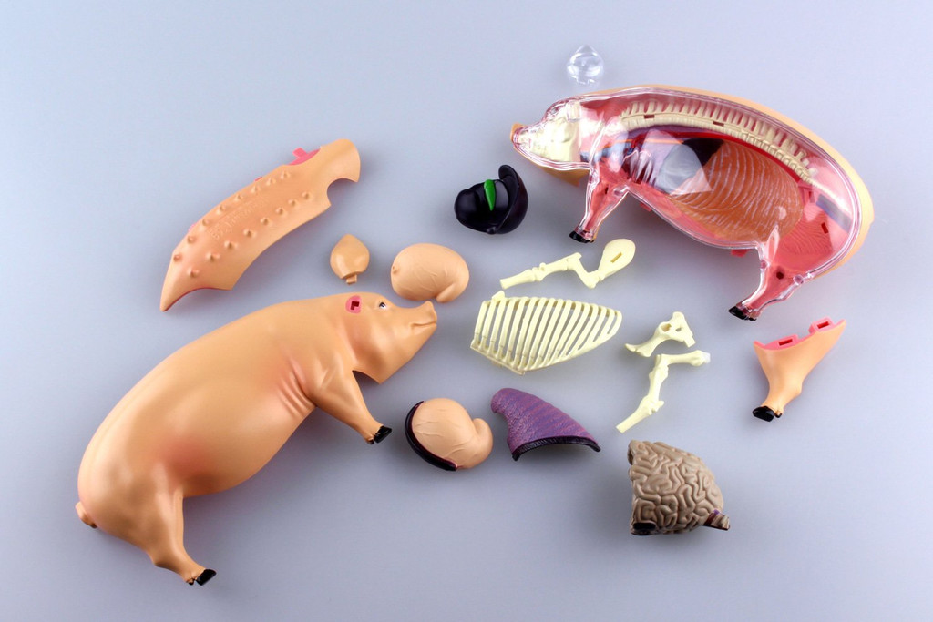 Aoshima 78211 4D Vision No.1 Pig Anatomy Model Non-scale Kit