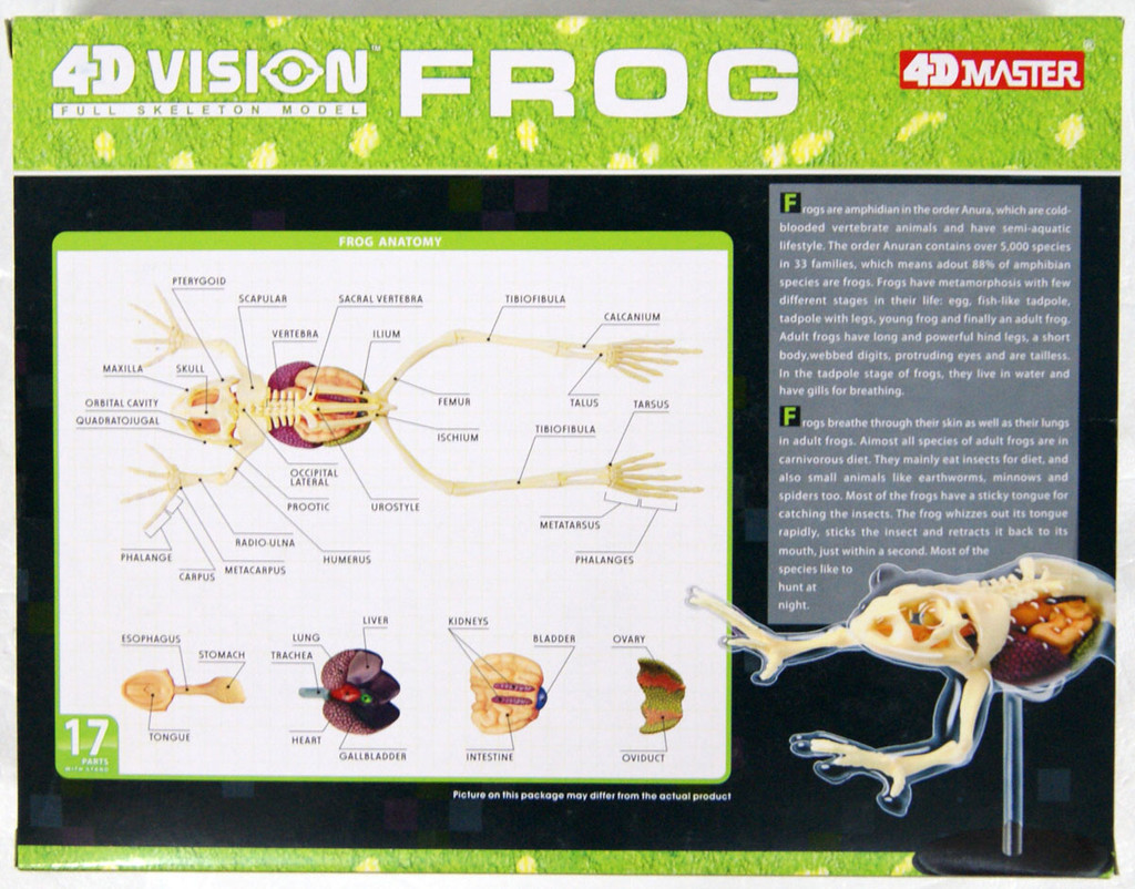 Aoshima 88371 4D Vision No.13 Frog Anatomy Model Non-scale Kit