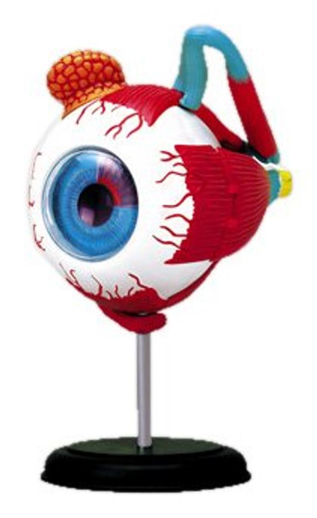 Aoshima 4D Vision Human Anatomy Model No.2 Eyeball Non-scale Kit