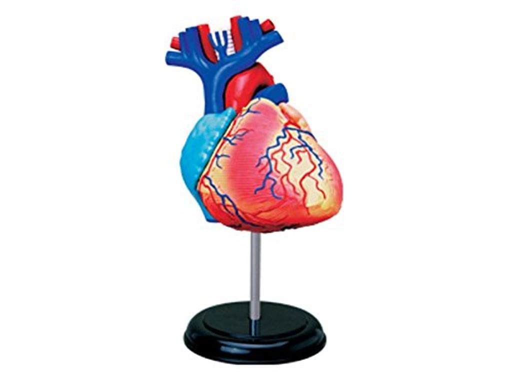 Aoshima 4D Vision Human Anatomy Model No.10 Heart Non-scale Kit