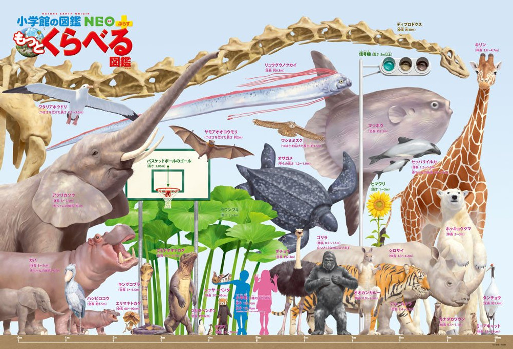 Beverly Jigsaw Puzzle B61-418 Comparing Big Animals Encyclopedia (1000 Pieces)